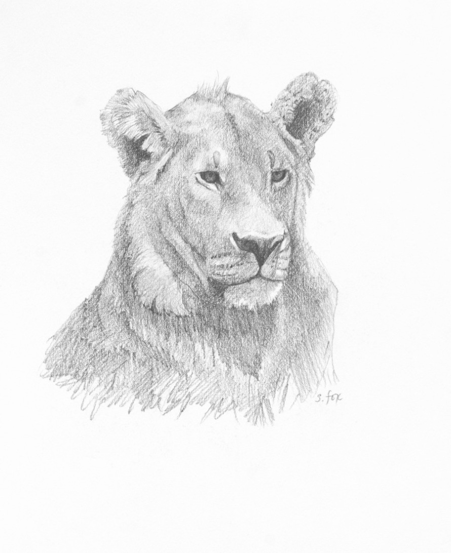 young-lion