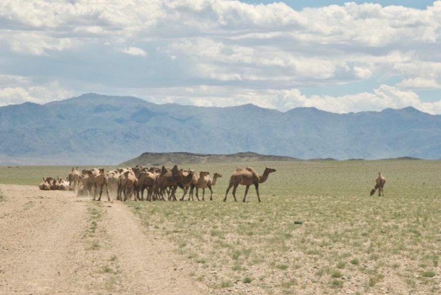 Mongolia2010-07-17-20-46-16
