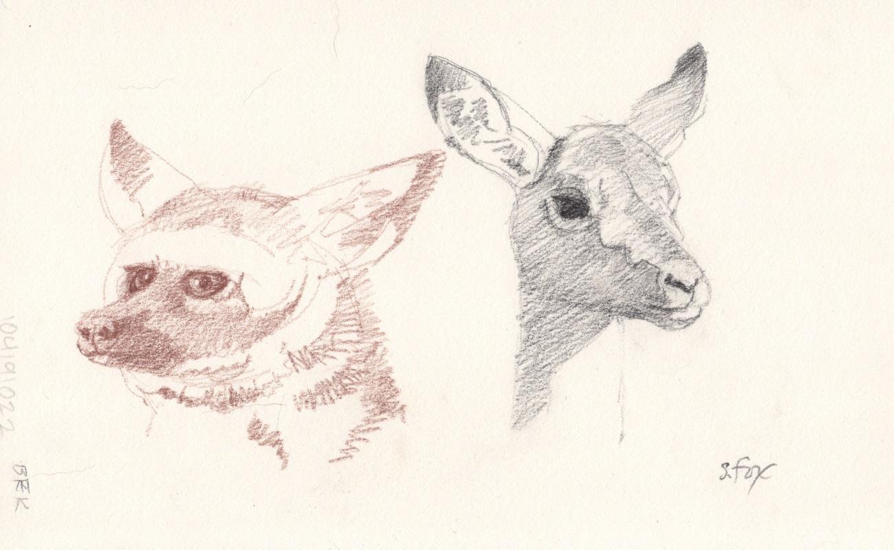 fox, gazelle