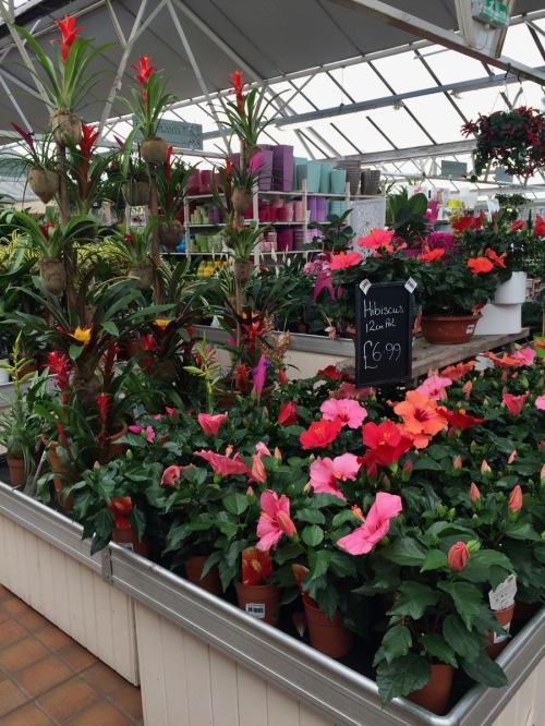 garden shop 1