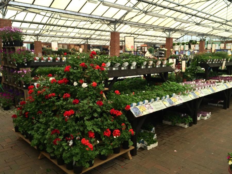 garden shop 7