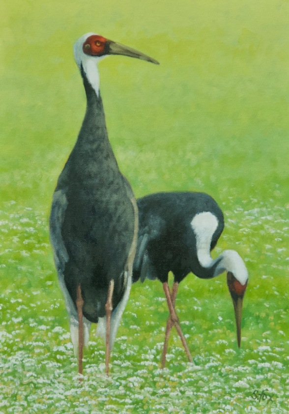 white-napped cranes