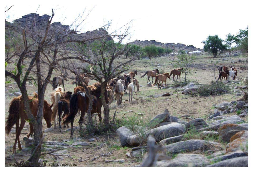 horses 3_wm