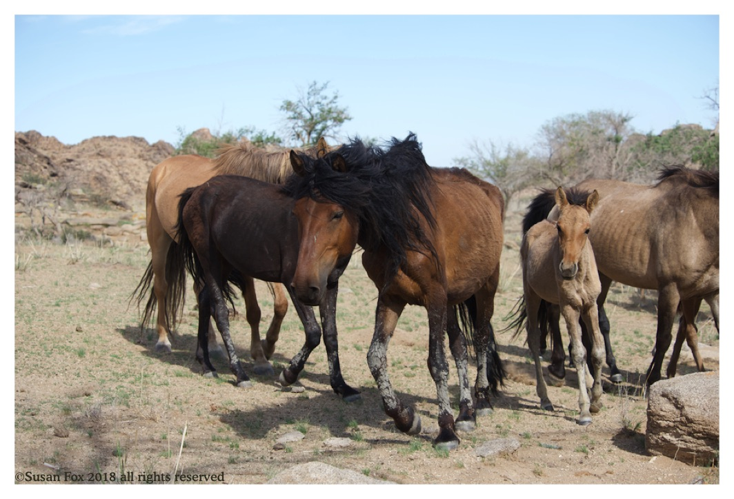 horses 4_wm