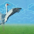 An Elegant Pair (White-napped Cranes)- (diptych) 900