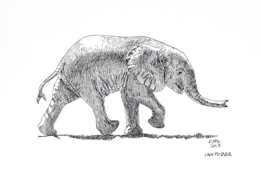 Inktober 11- Baby African elephant
