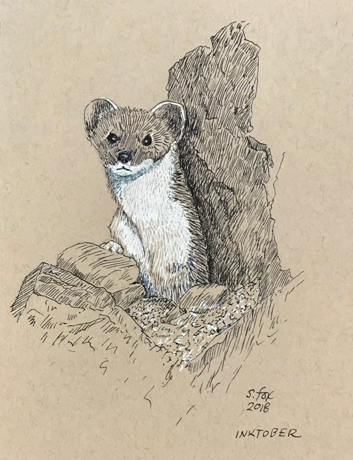 Inktober 12- White-tailed Stoat