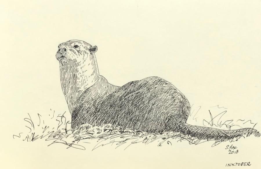 "Inktober 15- ""River Otter"""