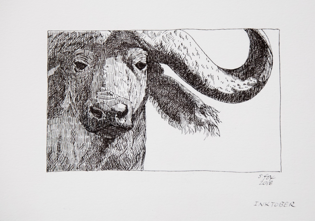 "Inktober 21 ""Cape Buffalo"""