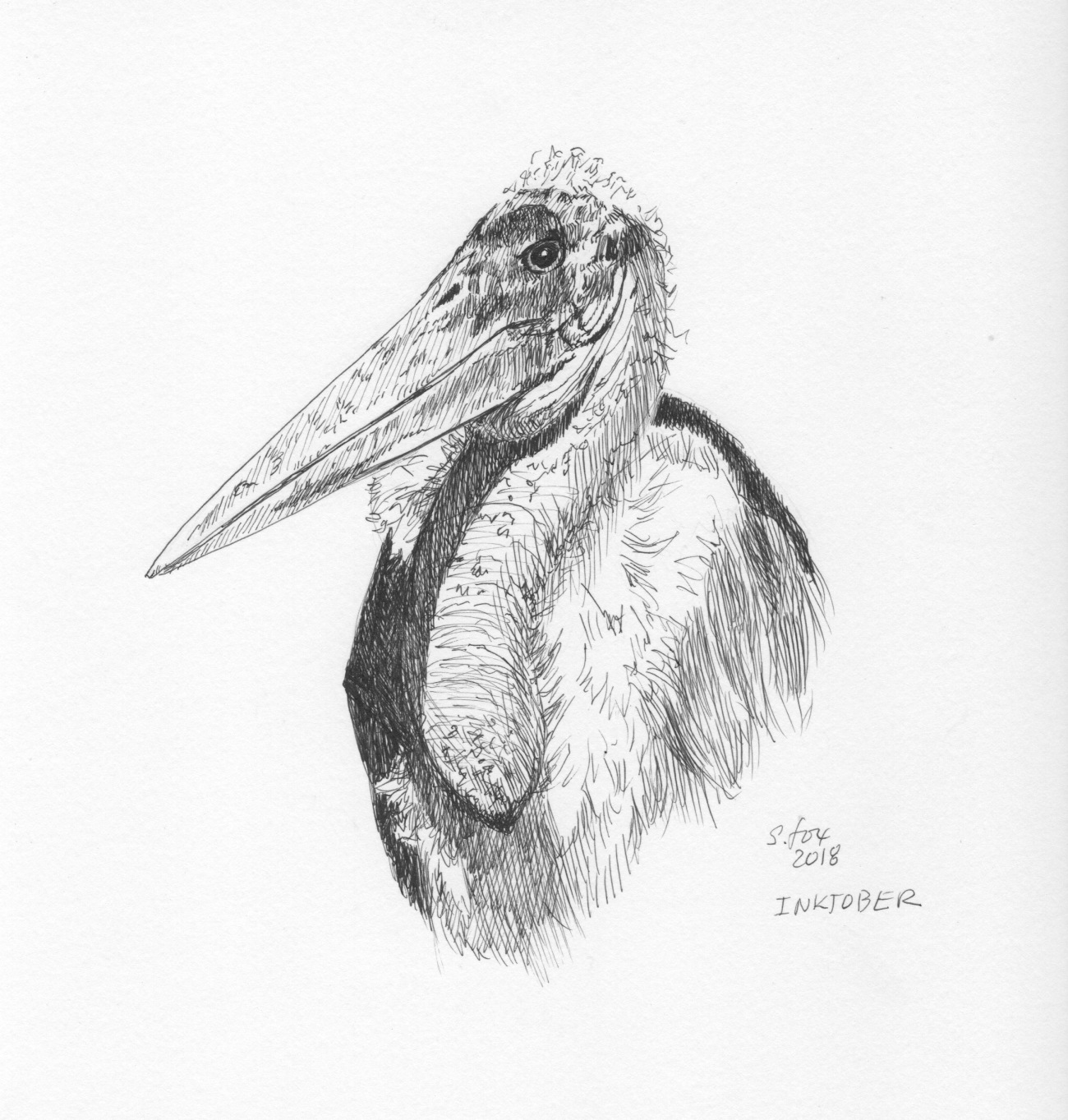 Inktober 5- Marabou stork.jpeg