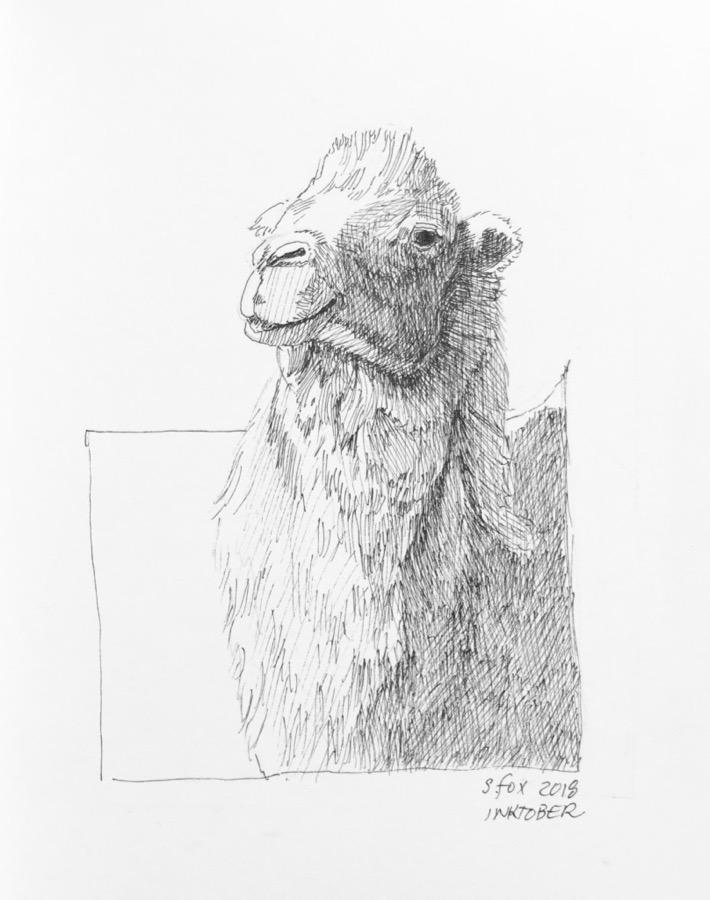 Inktober 6- Bactrian camel