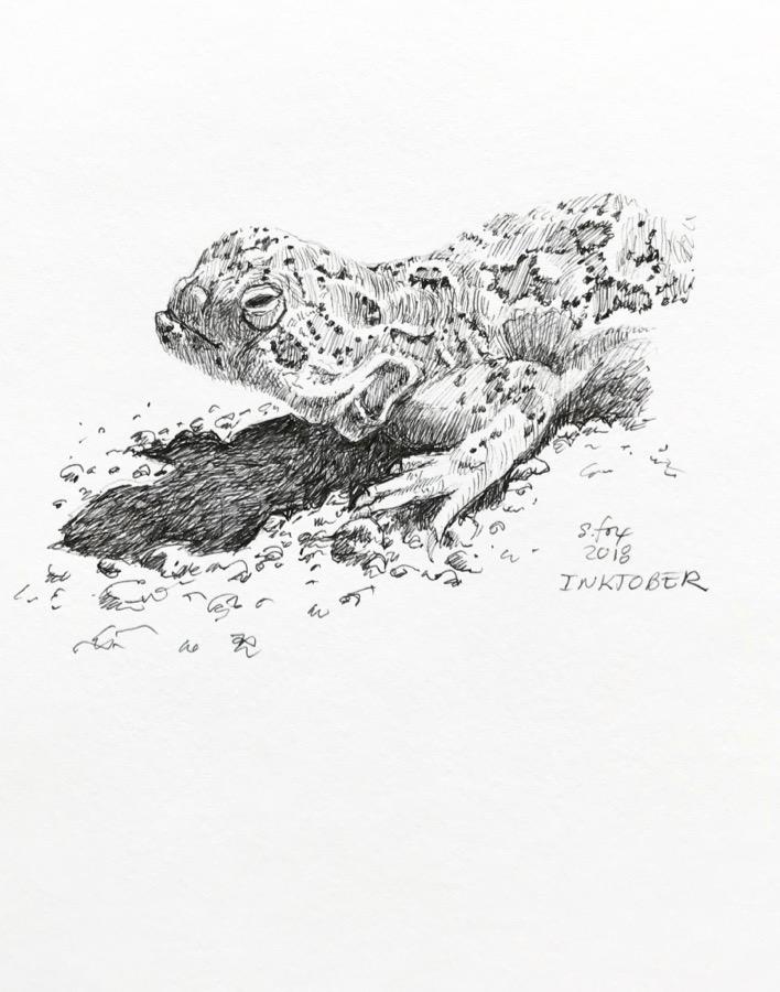 Inktober 7- Mongolian agama lizard