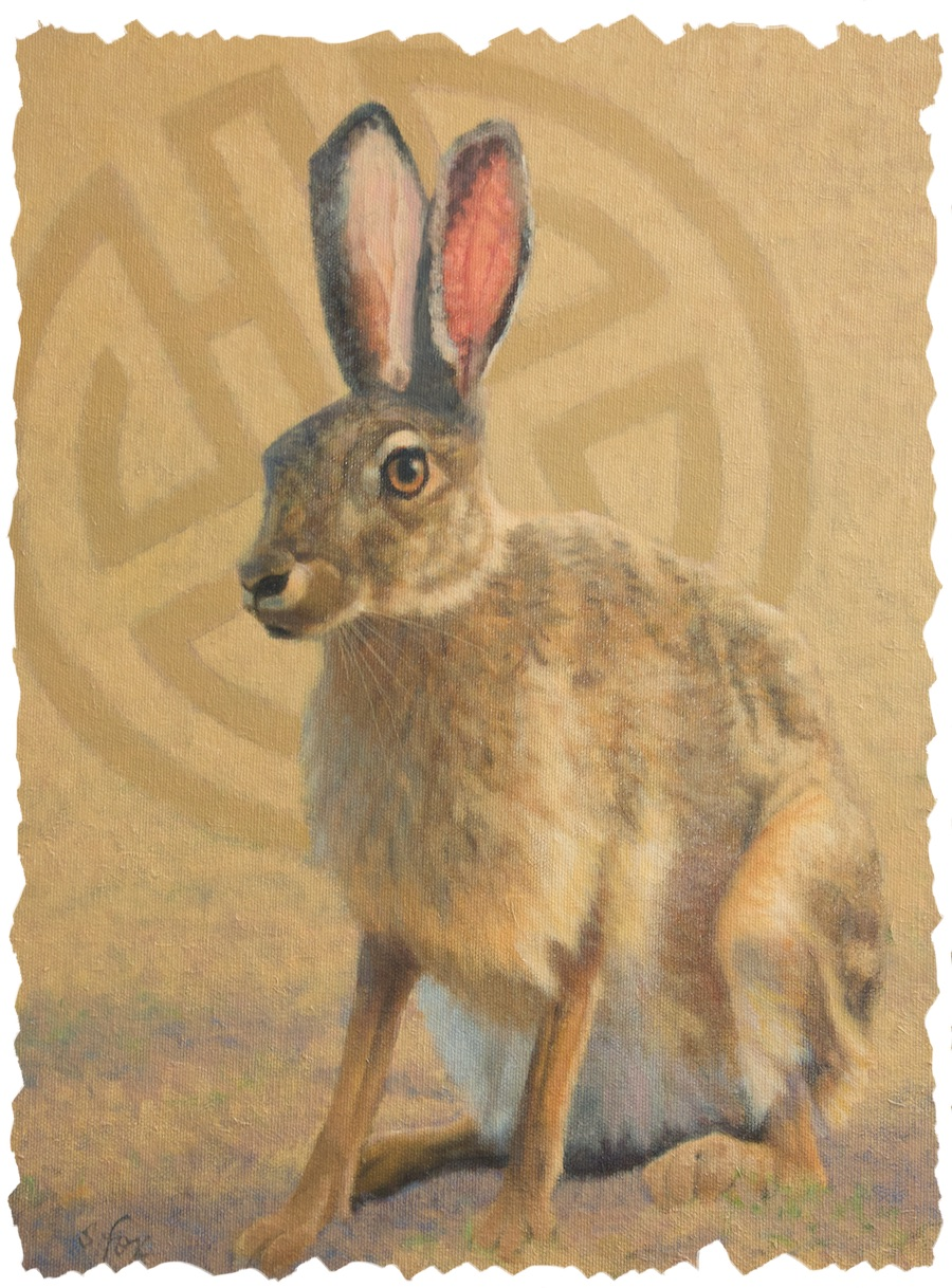 Tolai Hare, Mongolia 900