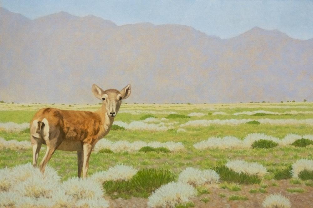 Watchful (Saiga Antelope)