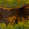 red cow header